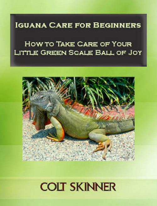 Product picture Iguana Care for Beginners